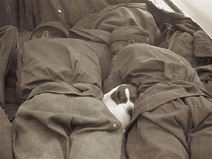 Russian Soldiers Of WWII Sleeping With Puppy