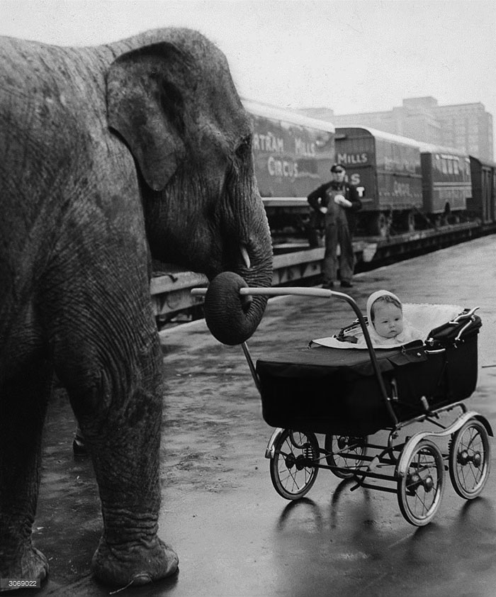 Circus Baby Yvonne Kruse Is Pushed In Her Pram By 'Kam', One Of Her Mother's Charges, On Their Arrival At Addison Road Station, London, From Their Winter Quarters At Ascot, 1958