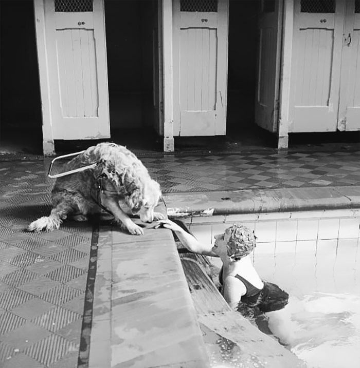 A Blind Woman Relaxes At The Local Swimming Pool, Watched Over By Her Guide Dog, 1966
