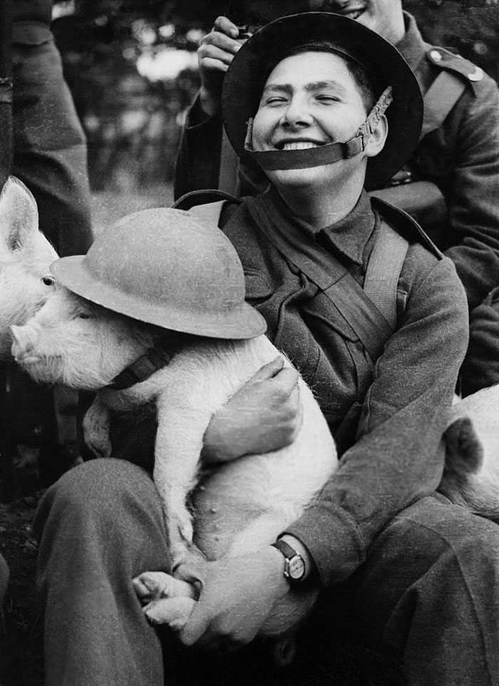 Young Soldier Holding A Little Piggy With Lid In London During WWII