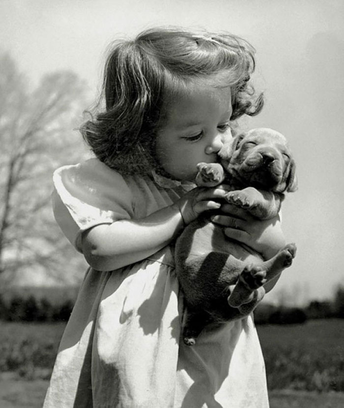 Christina Goldsmith Kissing A Weimaraner Puppy From Her Father's Stock Of Weimaraner Hunting Dogs, 1950