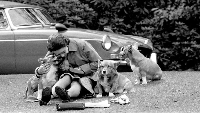 Queen Elizabeth With Her Much-Loved Corgis Watching The Royal Windsor Horse Show, 1973