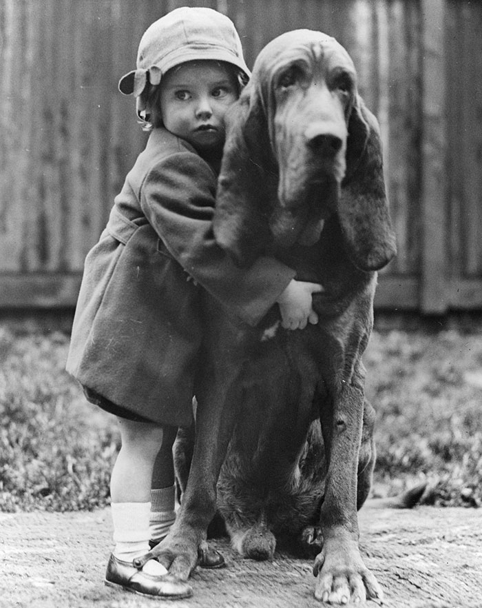 Champion Bloodhound Leo Of Reynalton Being Cuddled By His Little Mistress Dorothy Horder At The Crufts Dog Show In London, 1935