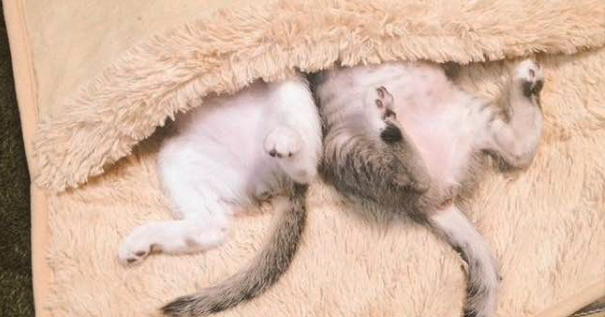 Kittens Discover A Heated Foot Warmer, And It Couldn't Get Any Cuter