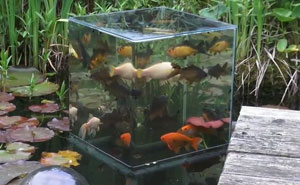 Have You Ever Seen An Inverted Aquarium?