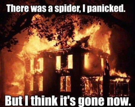 killing-spider-with-fire-588259ff0a739.jpg