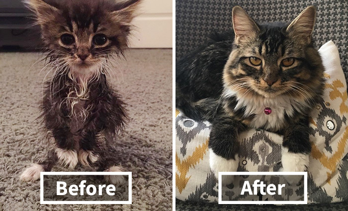 """Kangaroo"" Kitten Born Without Elbow Joints Was The Smallest And Weakest Of The Litter, Look At Her Now"