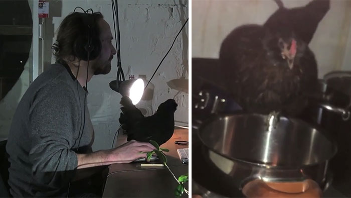 Man Loses His Pet Chicken, Finds Her In The Pan Next Day