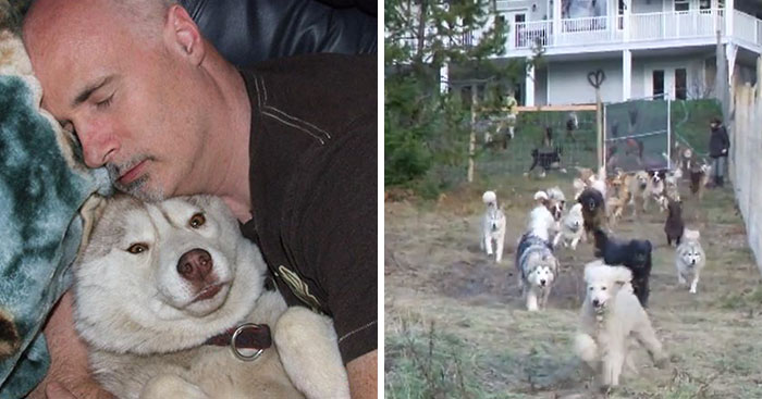 When This Man Adopted 45 Shelter Dogs, He Soon Realized They Deserve Better, So He Did Something Amazing