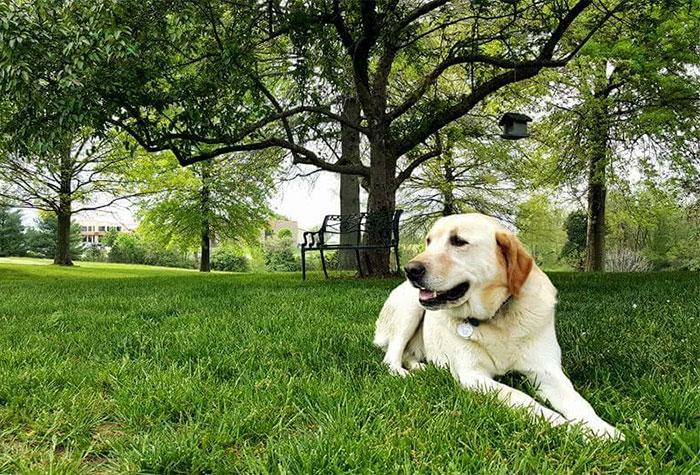 man-finds-dog-id-tag-dew-adventures-10