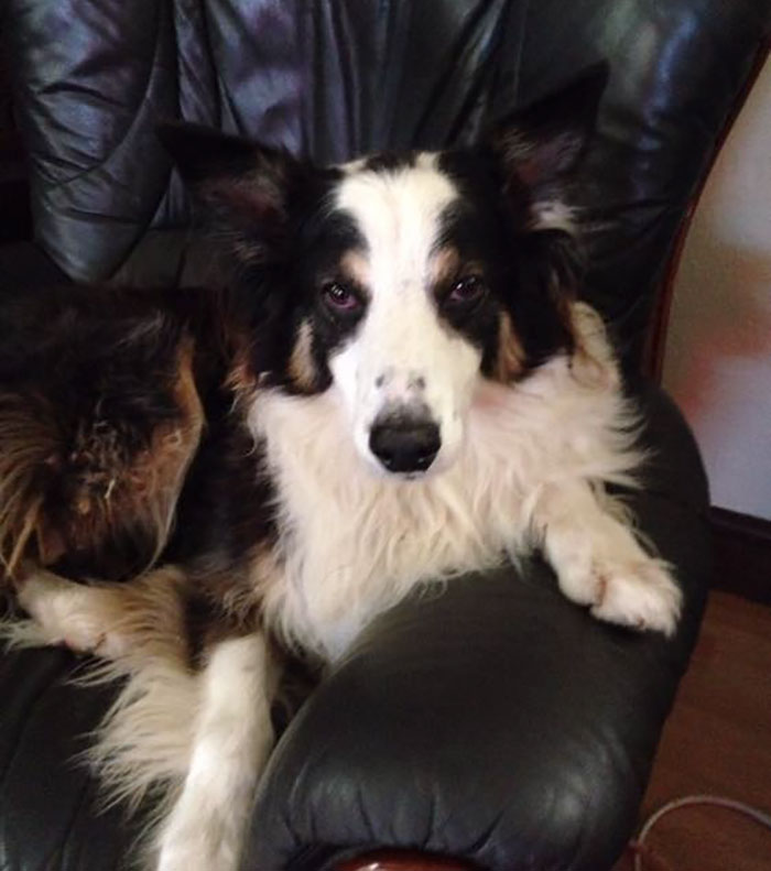 missing-dog-treks-50-miles-find-owners-casey-4