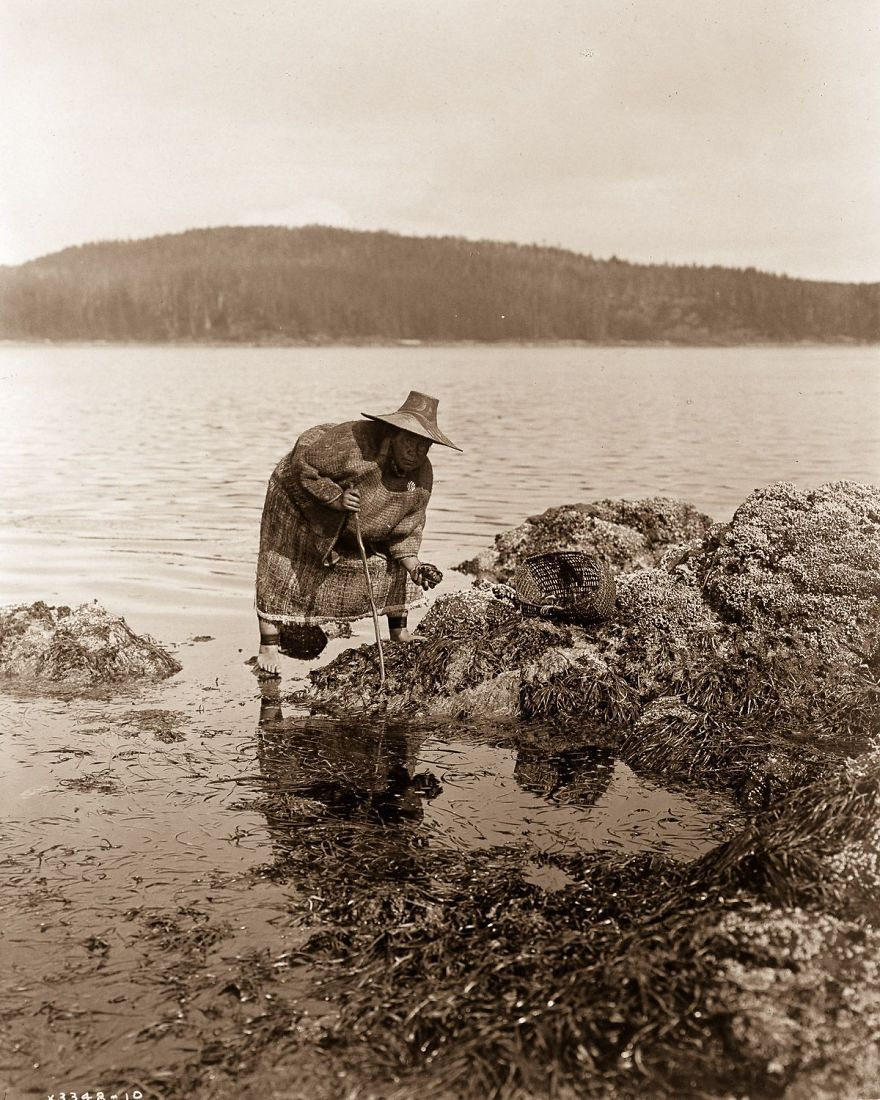 A Kwakiutl Gatherer Hunts Abalones In Washington, 1910