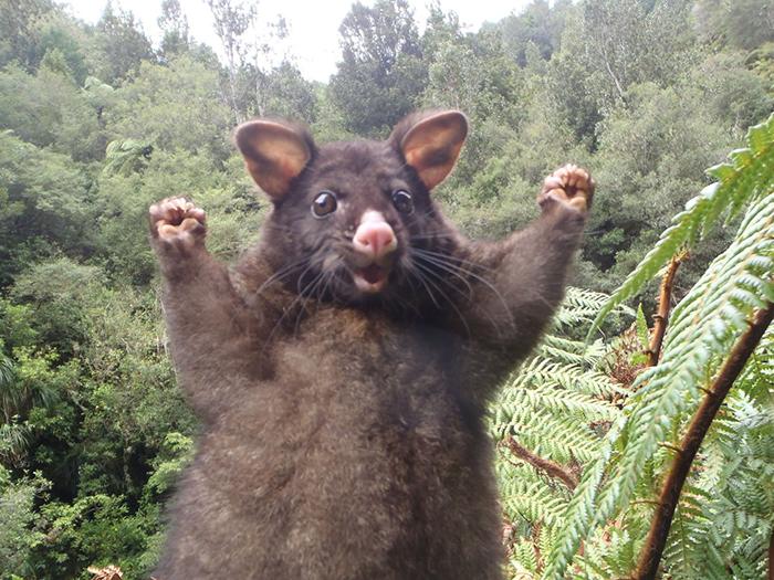 optimistic-opossum-new-zealand-33