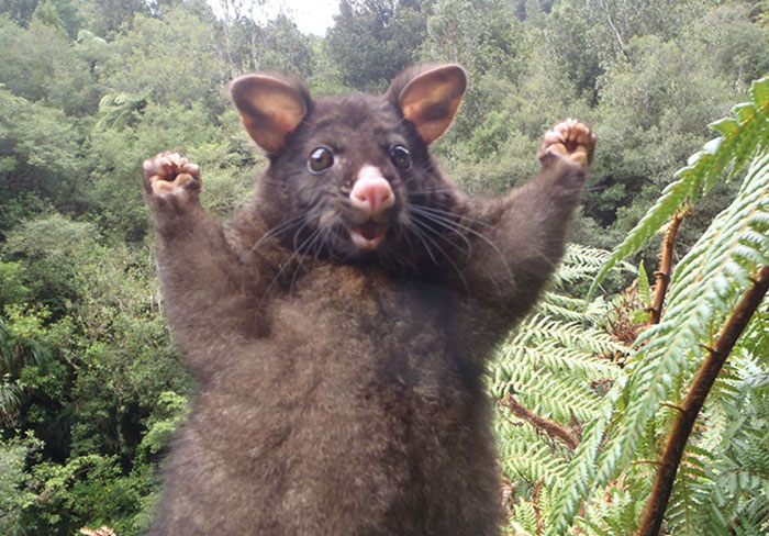 This Optimistic Possum Just Sparked A Hilarious Photoshop Battle
