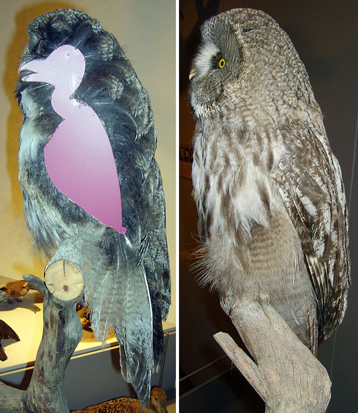 owls-without-feathers-16