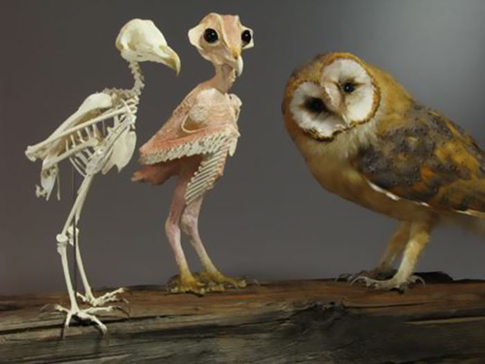 owls-without-feathers-4