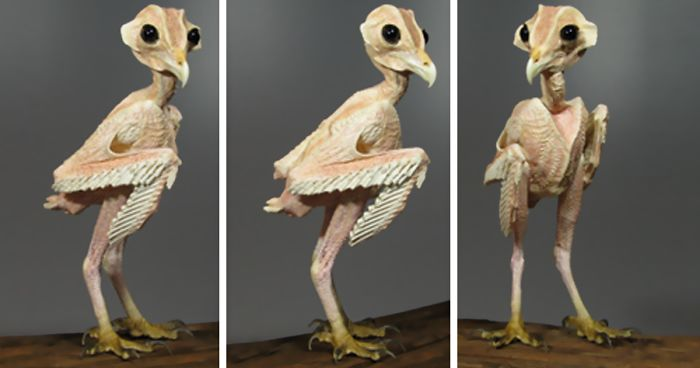 Have the bird naked man consider, that