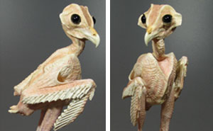 People Can't Get Over This Photo Of A 'Naked' Owl Which Shows How They Look Without The Feathers