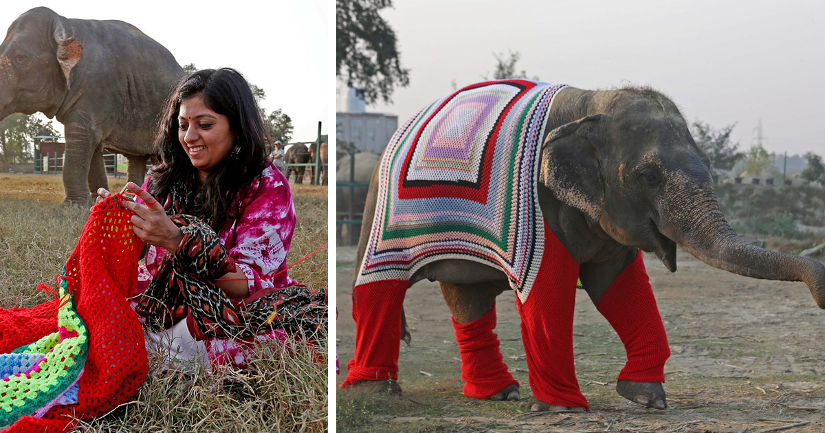 People Are Knitting Giant Sweaters For Rescued Elephants To Keep Them Warm On Chilly Nights