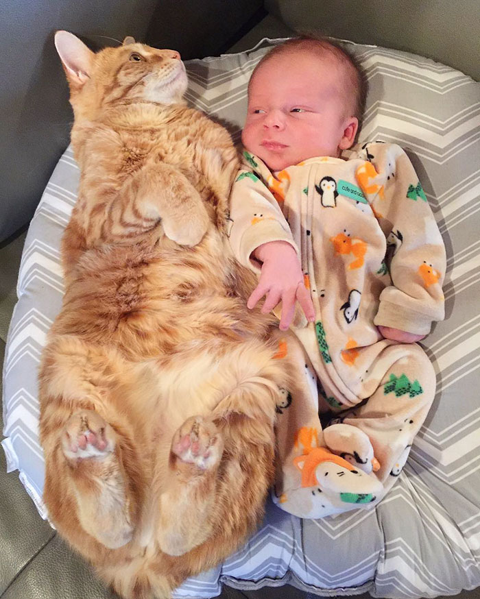 pets-family-friend-newborn-baby-sonny-12