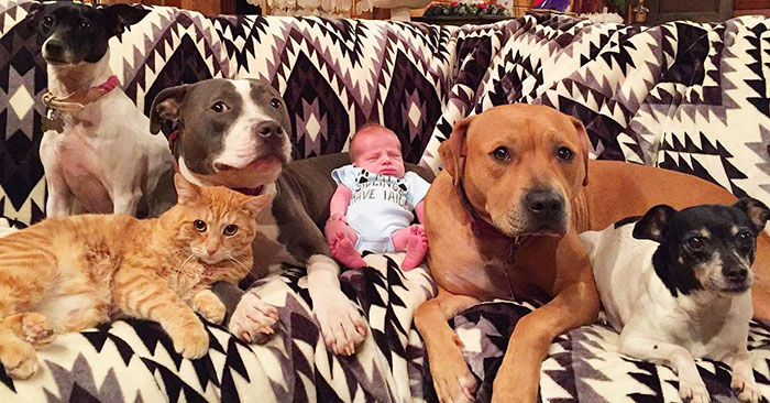 Family Of Pets Are Totally Obsessed With Their Baby Brother, And Watch Over Every Step He Takes