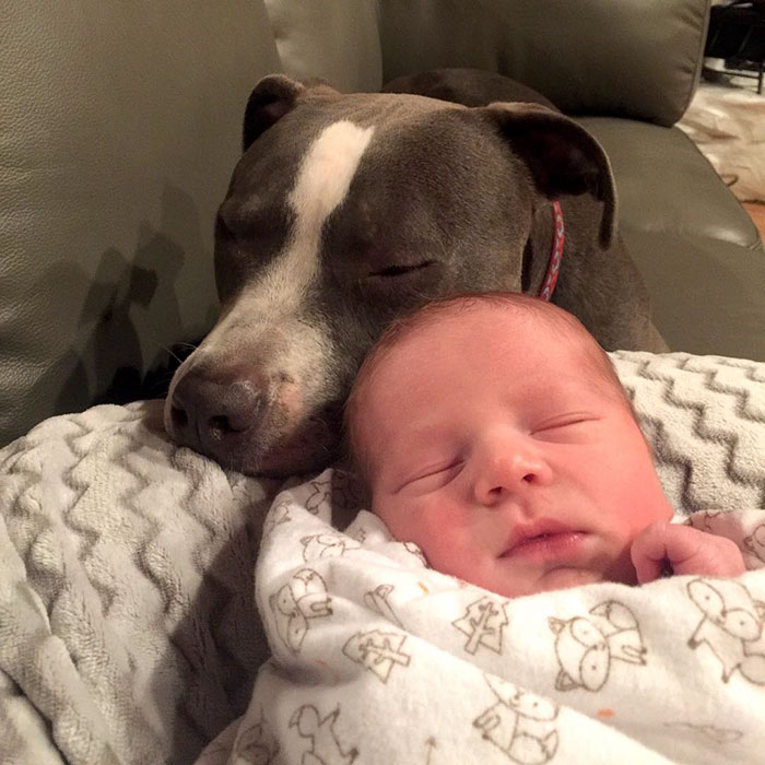 pets-family-friend-newborn-baby-sonny-7