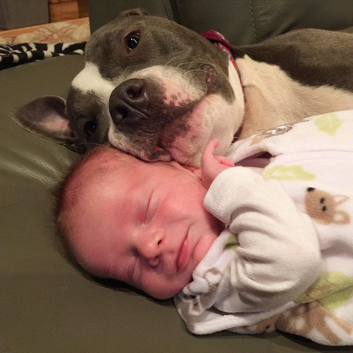 pets-family-friend-newborn-baby-sonny-9