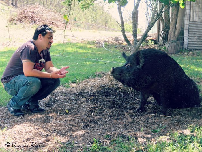 pig-spends-twelve-years-tiny-stall-edna-15