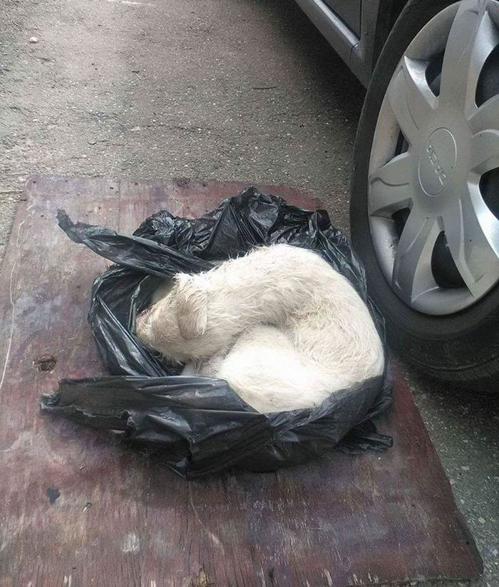 puppy-found-plastic-bag-transylvania-2