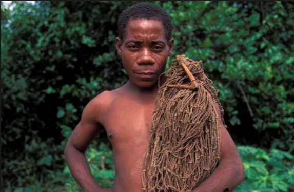 pygmy-tracey-morgan-5887b9d81b894.png