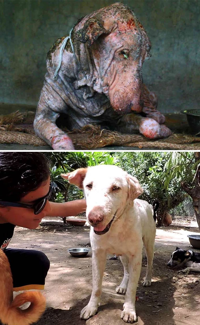 Dying Dog Found On Street, Was Suffering From Mange, And Clearly Had Had No Human Contact In A Long Time. It Was Completely Transformed In Two Months