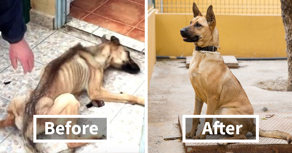 Change Rescue Dog S Name