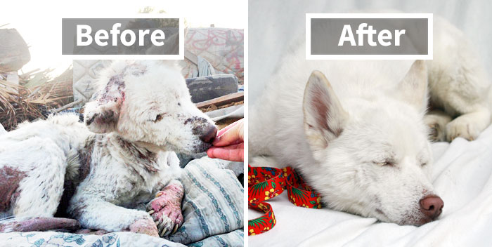 10+ Incredible Before & After Rescue Dog Transformations Show What Love Can Do