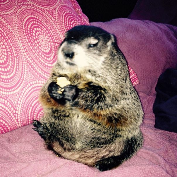 rescued-blind-woodchuck-coco-13