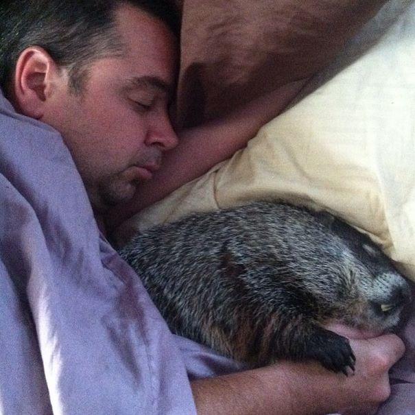 Как спит сурок