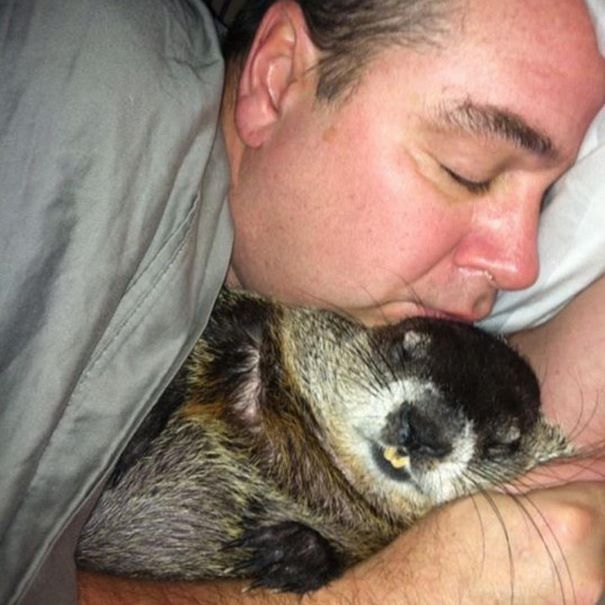 rescued-blind-woodchuck-coco-4