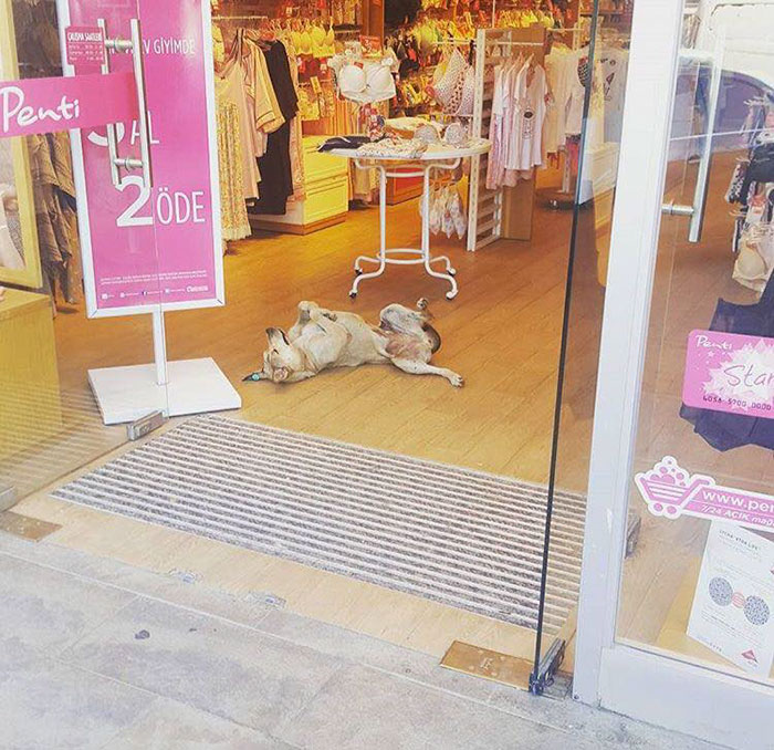 shops-help-stray-animals-istanbul-2