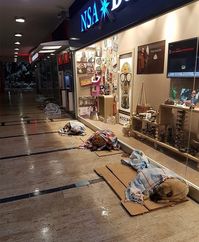 shops-help-stray-animals-istanbul-9