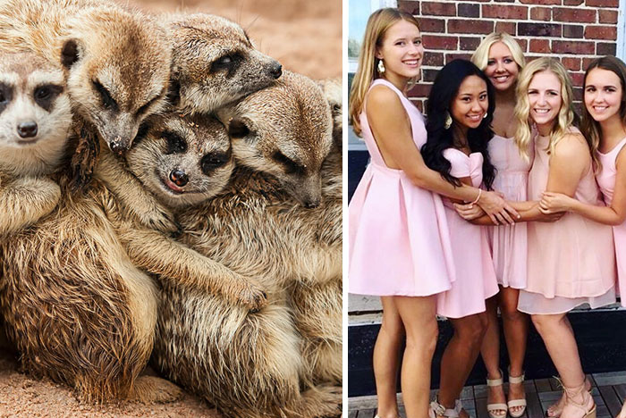 Sorority Girls Pose Like Meerkats