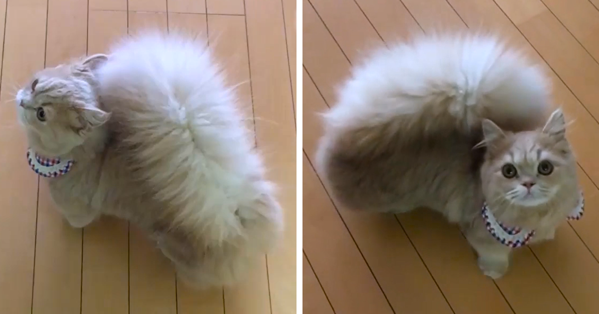 Cats With Long Tails
