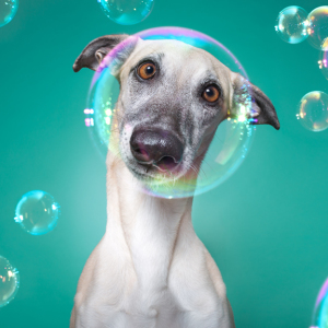 How I Turned My Camera-Shy Rescue Dog Into A Confident Photo Model