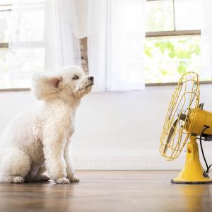 Dogs Vs Fans