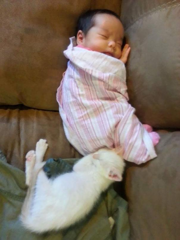 tiny-kitten-baby-girl-best-friends-1