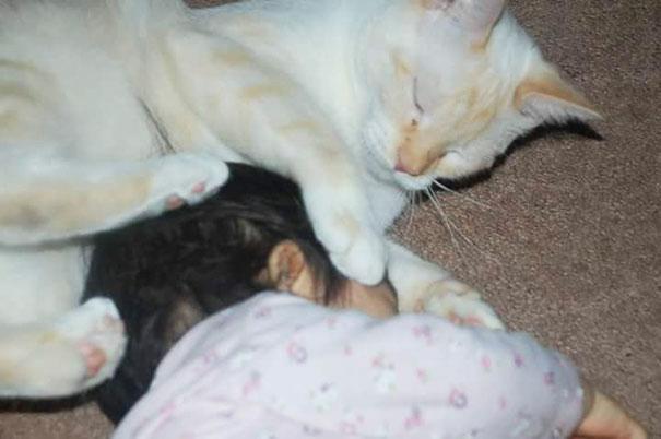 tiny-kitten-baby-girl-best-friends-10