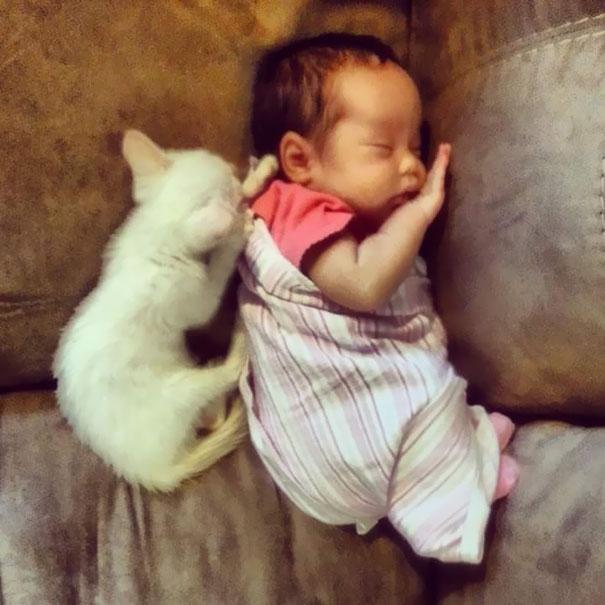 tiny-kitten-baby-girl-best-friends-3