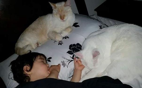 tiny-kitten-baby-girl-best-friends-4