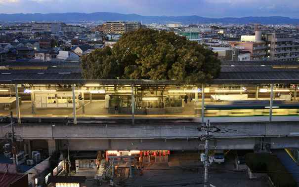 train-station-700-year-old-tree-kayashima-japan-2