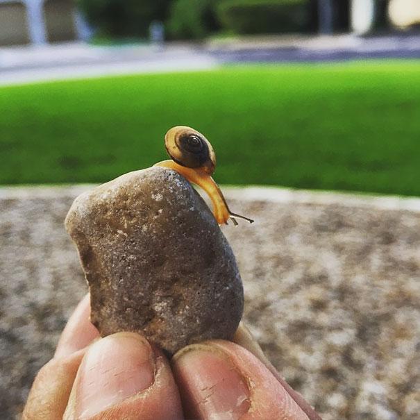 Transparent Snail