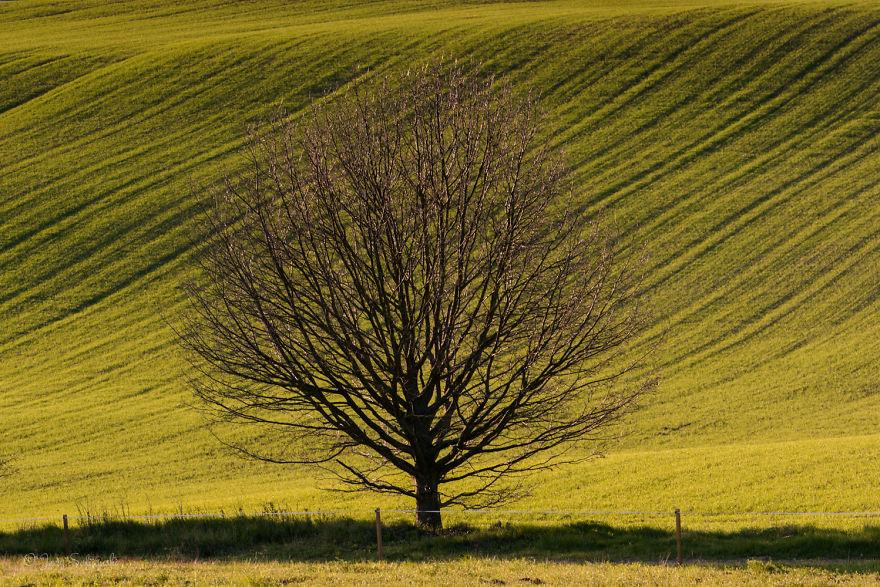 I Photographed An Oak Through The Seasons