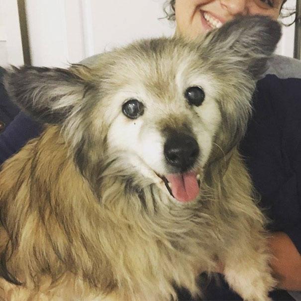 woman-saves-senior-dog-jaripo-5
